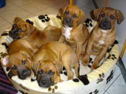 Welpen im Hundekorb
