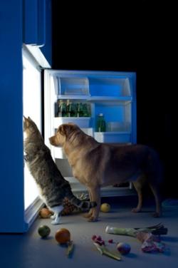 Hund und Katze am Kühlschrank